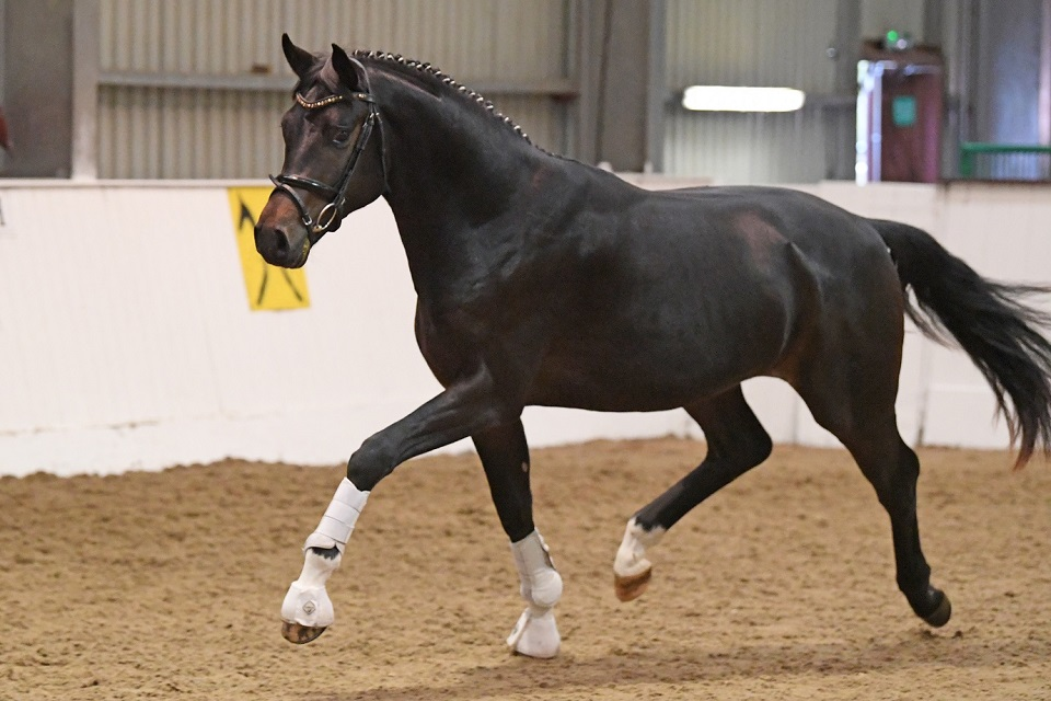 Furst Summer at stallion licensing