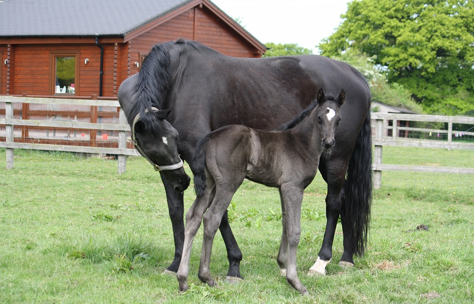 Summer Hit and foal 2020