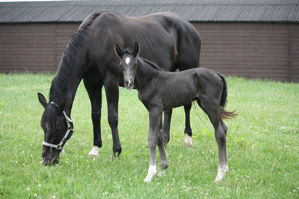 Duchesse and new dressage foal 2020