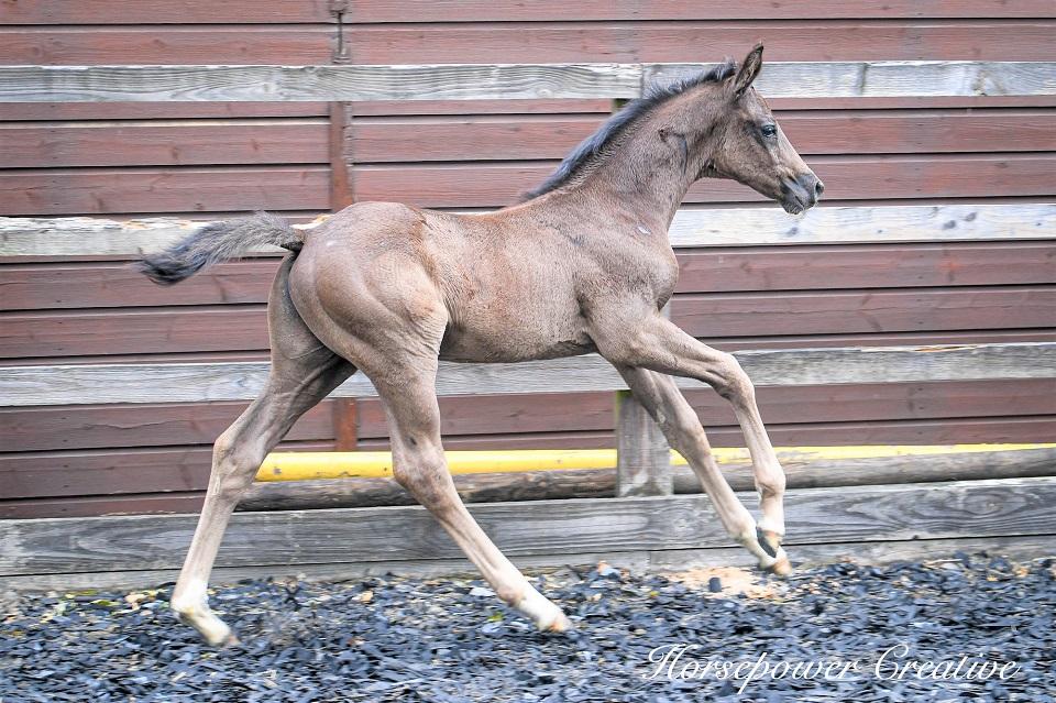 Bonheur cantering - 5 weeks old