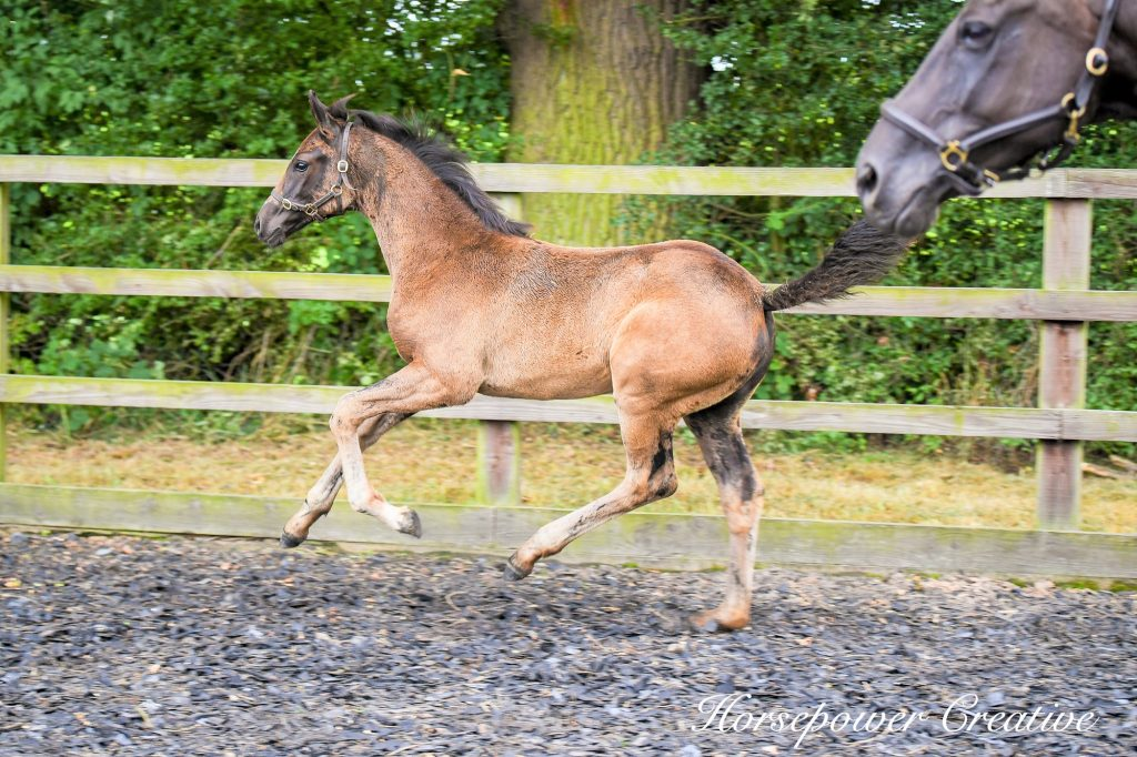 Wild at Heart 4 months cantering
